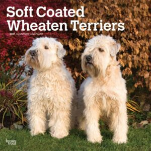 Softcoated Wheaten Terrier Kalender 2021